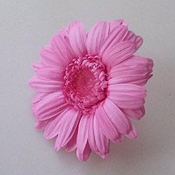 プリザーブドフラワー、ピンクのガーベラ