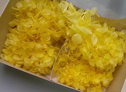 黄色のあじさい、プリザーブドフラワー